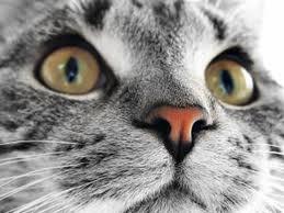 gato-inversor4